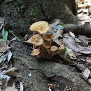 木の根のキノコ