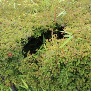 生垣の謎の穴