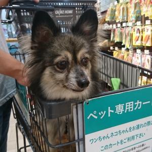 犬連れショッピング