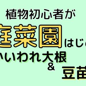 【初心者・超簡単・小スペース】家庭菜園始めます【かいわれ大根・豆苗】子どもの教育にも一役!?