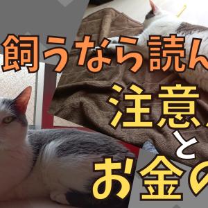 猫を飼いたいなら必読!猫と暮らすための注意点と初期費用+オススメ商品紹介