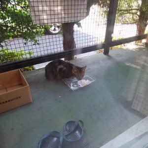 ベランダが猫の餌場に…