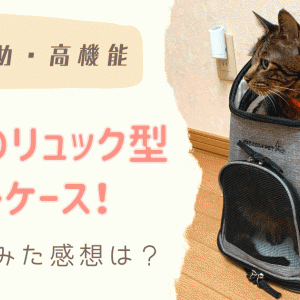 【おすすめ】高機能で猫用のリュック型キャリーケース!使ってみた感想は?