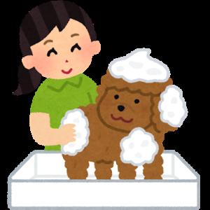第一種動物取扱業登録申請の代行をします【販売・ペットレンタル・訓練・展示業者】