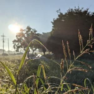うっすらと朝の霧に三文の徳