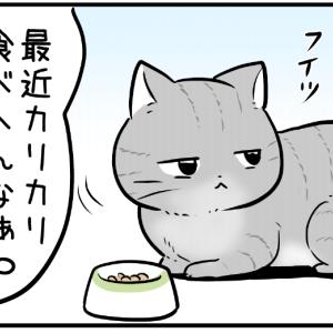 カリカリを食べない猫