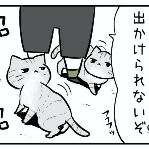 猫ちゃんの予言