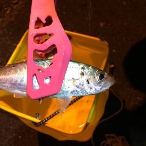 外房巡回から最後は例の富津へ、、、色んな魚が釣れたは釣れたが、持ち帰りには至らず、、、