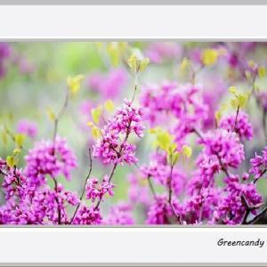 兵庫県立フラワーセンターの花々