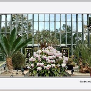 奇跡の星の植物館(その2)