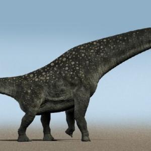 ちょっと昔はめちゃくちゃデカい恐竜が世界中にいっぱいいたという事実