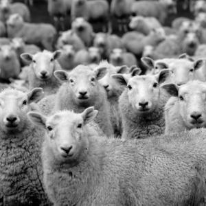 村上春樹音楽-羊をめぐる冒険-羊をめぐる冒険