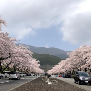桜舞い散る中には~~♪