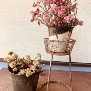 【インテリア】掃除が大変な草花は玄関先に