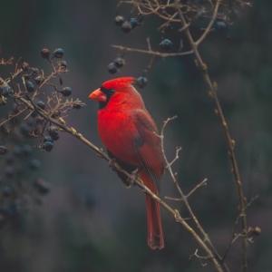 NYで見られる鳥/野外で気を付けたいこと