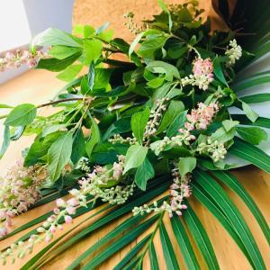 花のある暮らし「ルビースパイス」