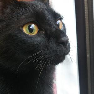 猫のひげが短い理由と疑惑の末っ子