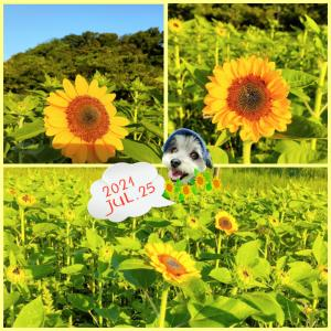 ■■夏だ!朝ん歩■■