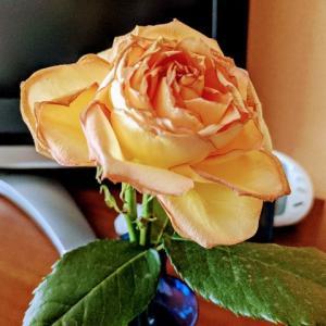 記念日のお花を 最後まで愛でたい