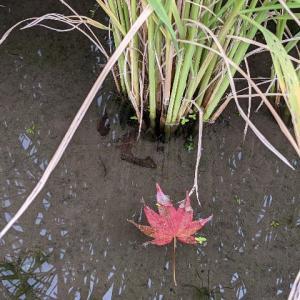 ブログ再開しました。そして季節を感じるお散歩