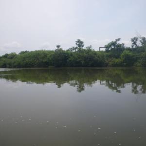 カクシン 入間川