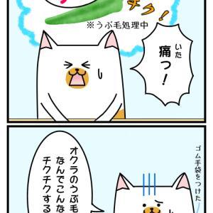 夏休み企画 2コマ漫画 第十話 「オクラのうぶ毛」