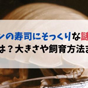【閲覧注意】サーモンの寿司にそっくりな深海生物の正体は?大きさや飼育方法まとめ!