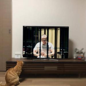 猫が見てるテレビにお前らの好きな画像映すから貼ってってや~