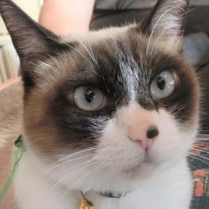 猫飼ってる家の前通ると時々外に向かって「うきゃきゃきゃきゃー!うきゃきゃ!」みたいな