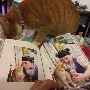 <ΦωΦ>世界の猫スポットを挙げるスレ<ΦωΦ>
