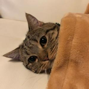 すまんが猫の画像貼る