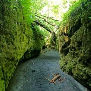 苔の回廊から風不死岳