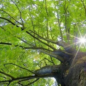 動く物皆生かされて万緑や