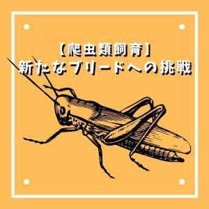 【爬虫類飼育】新たなブリードへの挑戦