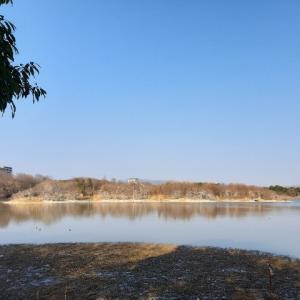 【伊丹の子連れオススメスポット】野鳥で有名な昆陽池公園で自然と触れ合いながらお散歩。