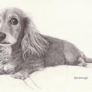 私の愛犬:ボールペン画  #001
