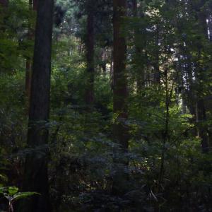稲荷山一周ハイキング 写真でお写んぽ2