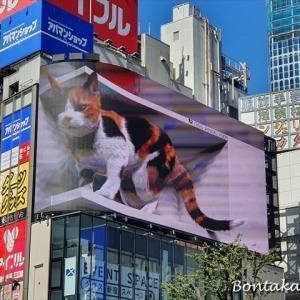 飛び出てきそうな迫力!新宿東口の猫