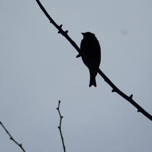 名前不明の鳥