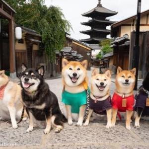 ごろたろう犬具さんの柴まみれ撮影会に飛び入り参加しました!!~清水寺から戻って八坂の塔をバックにみんなで記念撮影~