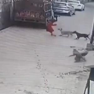 [動画0:30]7歳の少女、10匹以上の犬に襲われる・・・