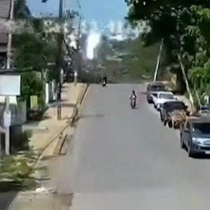 [動画3:27] 樹齢300年の菩提樹、バイクが巻き込んで倒れる
