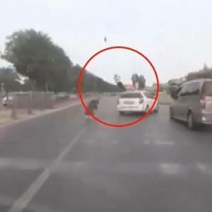 [動画1:03] 信号無視の歩行者、車に撥ねられ飛ばされる