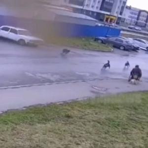 [動画0:15] 犬の散歩をする車椅子の男性、野良犬に襲われる