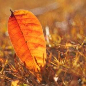 リルケの詩「秋」から死と人生を考える