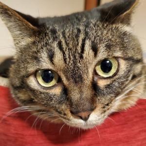五月病もどきのにちぶろぐを毎日癒してくれる娘(猫)の日常がかわいすぎる