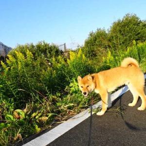 綾瀬川の朝散歩♪