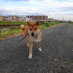 綾瀬川の朝散歩♪隣の畑は、素晴らしい…