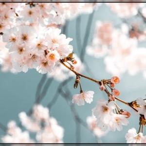 【ブログ運営報告】2021年4月のPV数と収益【毎日更新継続!】