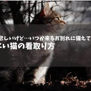 猫とのお別れに備えて…後悔しない猫の看取り方